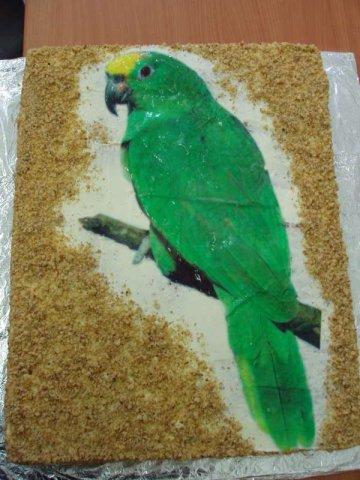 orechovy papousek Na přání