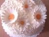 thumbs dort kopretiny Na přání